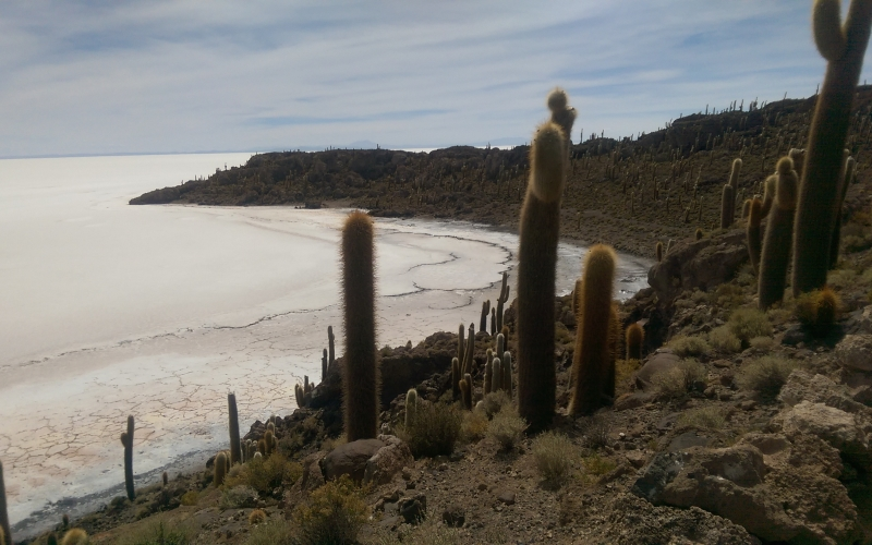 Boltur: Maravillas andinas Orinoca – Salinas de Garci Mendoza – Uyuni
